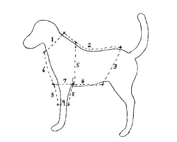 Custom Dog Apparel Patterns