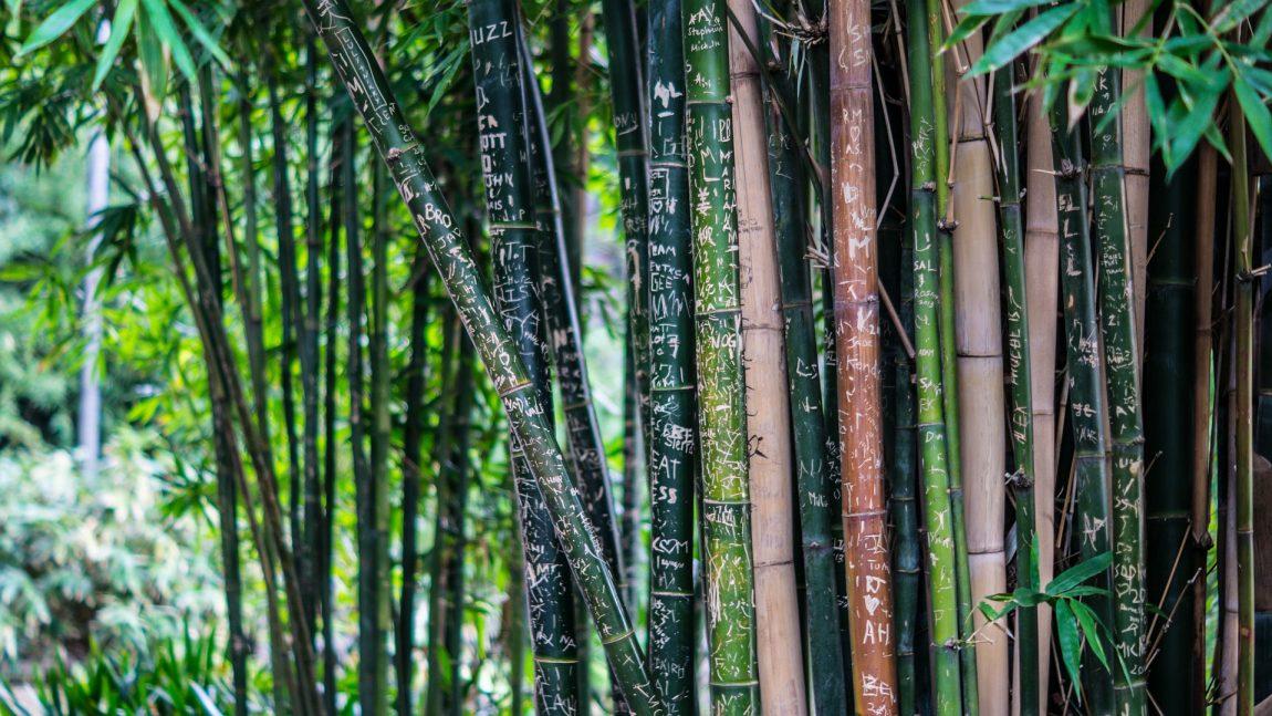 Bamboo Clothing Manufacturer