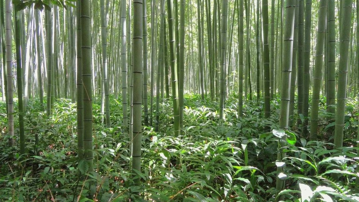 Bamboo vs Cotton: Which Is More Sustainable?