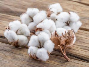 Organic Wholesale Cotton Clothing